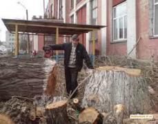 Дроблення гілок Київ ,спил,видалення дерев,вивіз гілок