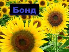 """Гібрид соняшнику """"БОНД"""" (гранстароустойчивый)"""