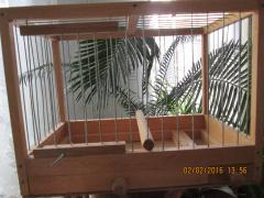 канарки