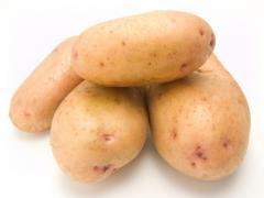 Картопля сорту Рів'єра