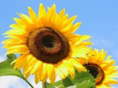 Магазин насіння, засобів захисту рослин, добрив