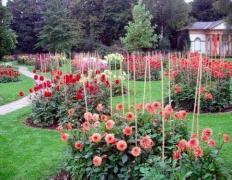 Підпори для квітів і рослин