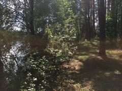 Продаю бізнес у Друскінінкай, Литві: разом з лісовим ділянкою
