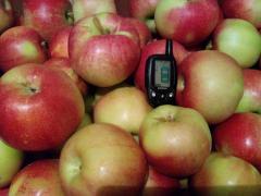 Продаж. Плодоносний яблуневий сад у Криму.Радянський