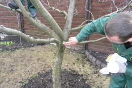 Пропонуємо професійну обрізку дерев