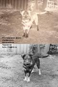 Реставрація фотографій. Оцифровка фотоплівок
