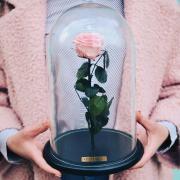Роза в колбі