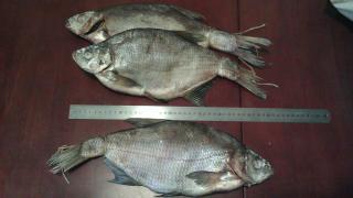 Риба в'ялена, сушена тараня, лящ, товстолоб