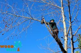 Спил дерева. Викорчувати пень. Обрізати сад
