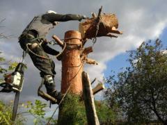 Спилювання дерев будь-якої складності, Київ і область